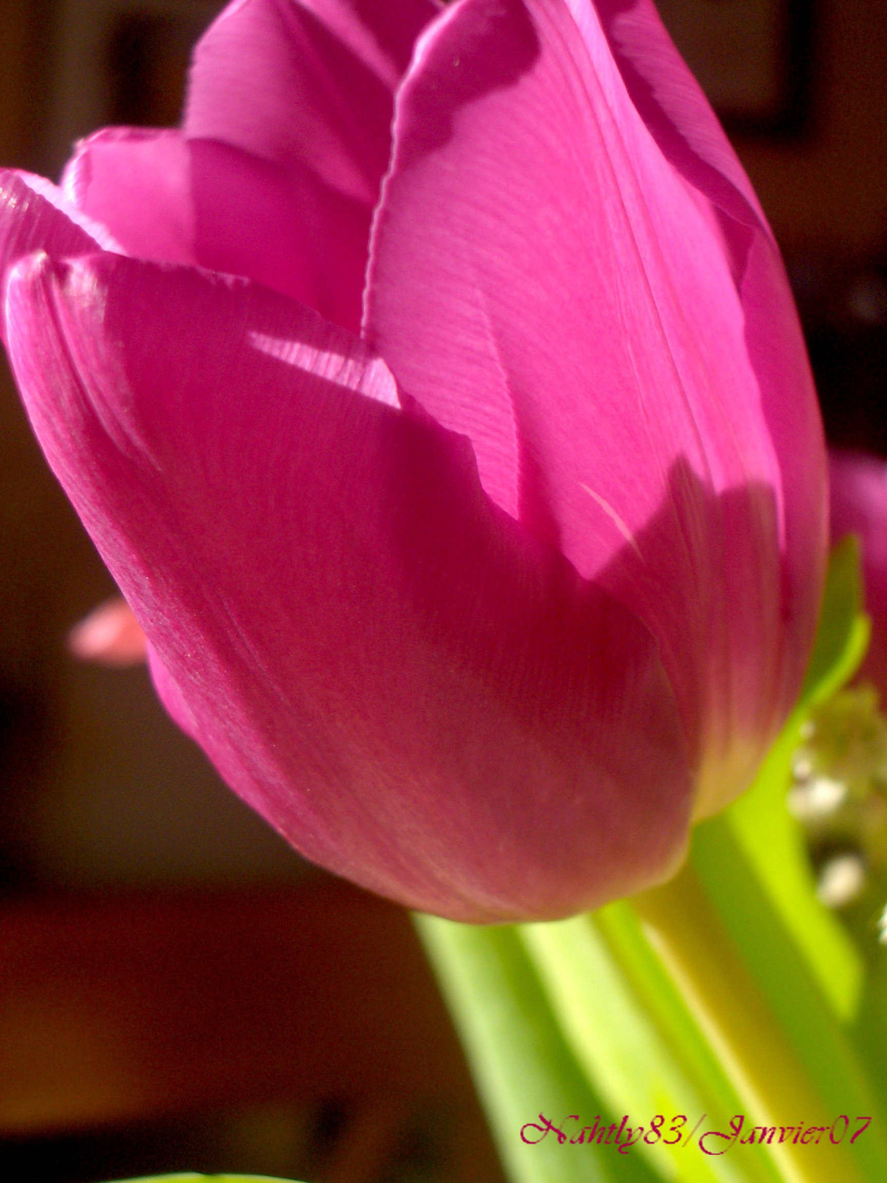 bouquetdejanvier07.2020.jpg