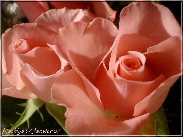 bouquetdejanvier07001.jpg