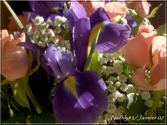 bouquetdejanvier07003.jpg