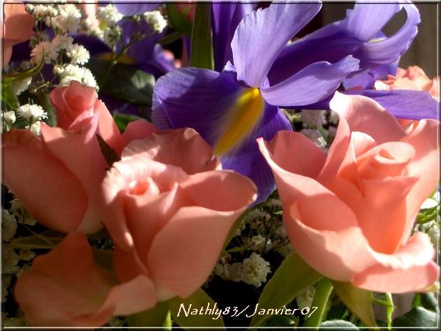 bouquetdejanvier07005.jpg