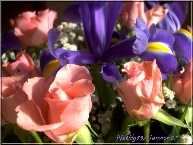 bouquetdejanvier07006.jpg