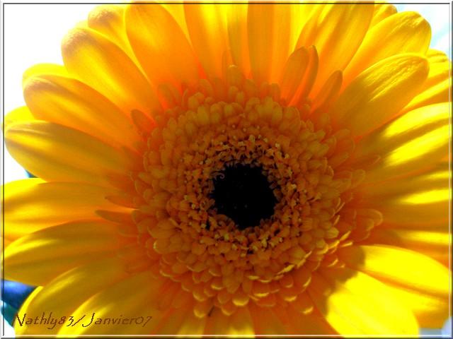 bouquetdejanvier07011.jpg