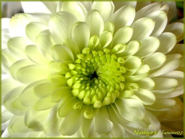 bouquetdejanvier07019.jpg