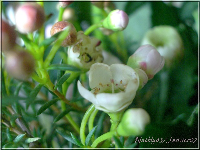 bouquetdejanvier07021.jpg