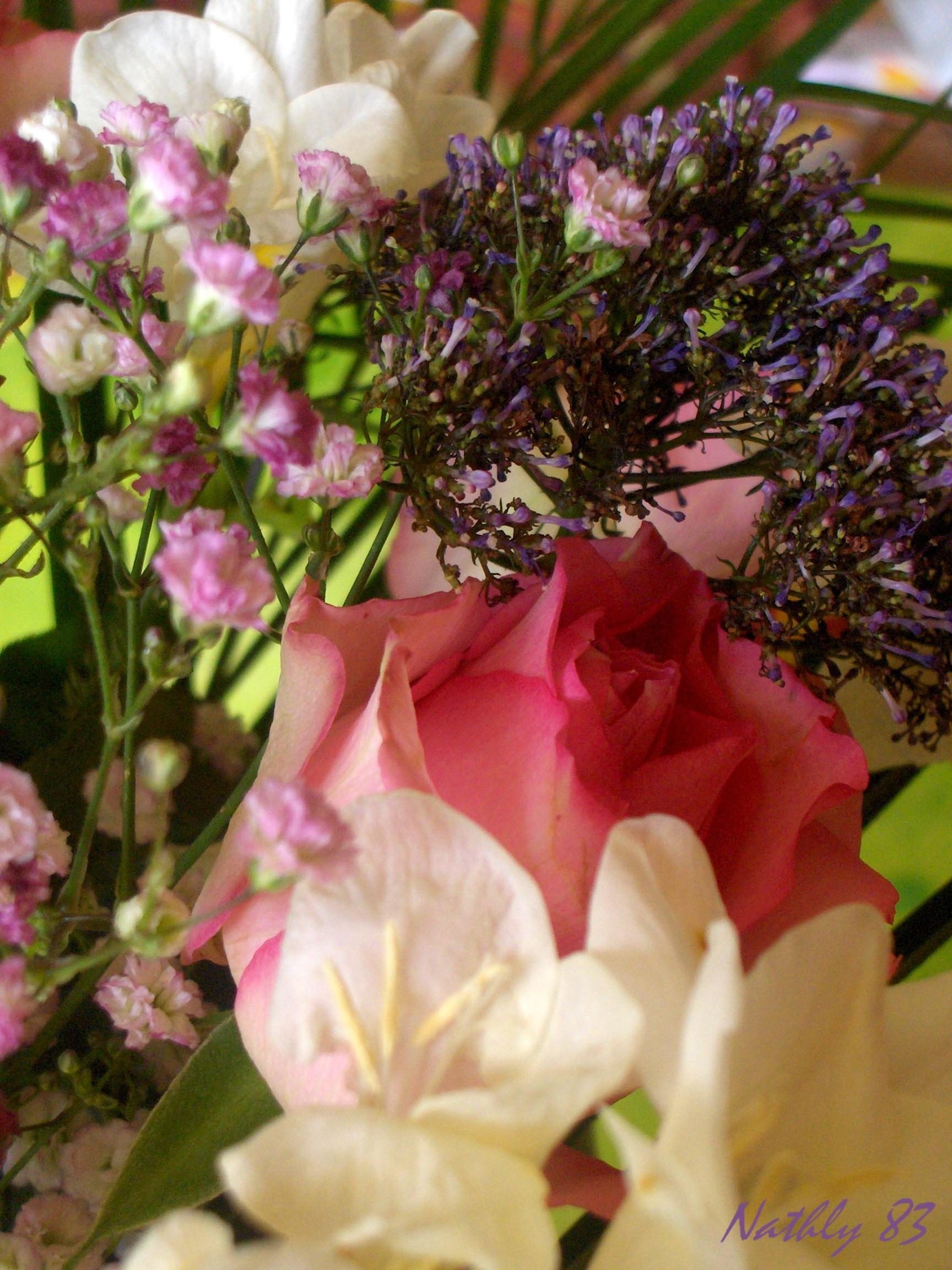bouquetdu7fvrier07016.jpg