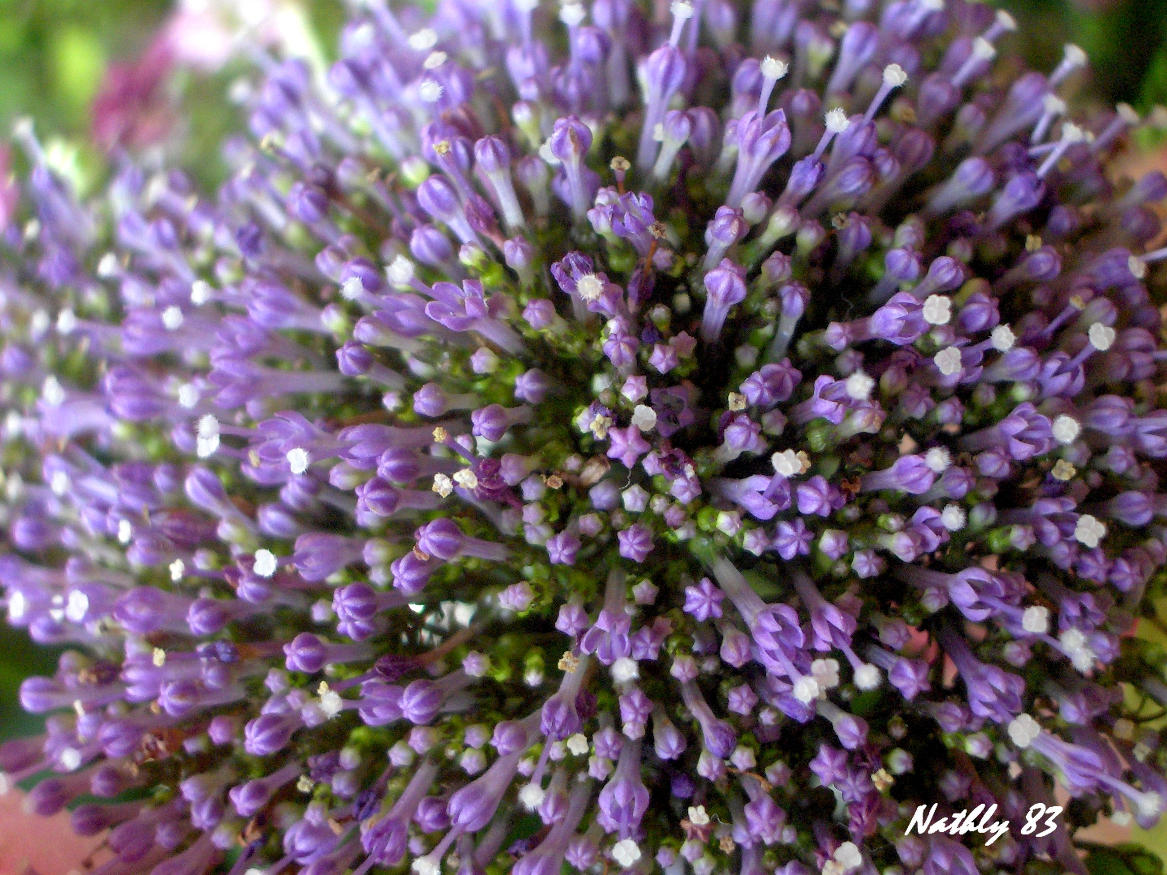 bouquetdu7fvrier07021.jpg