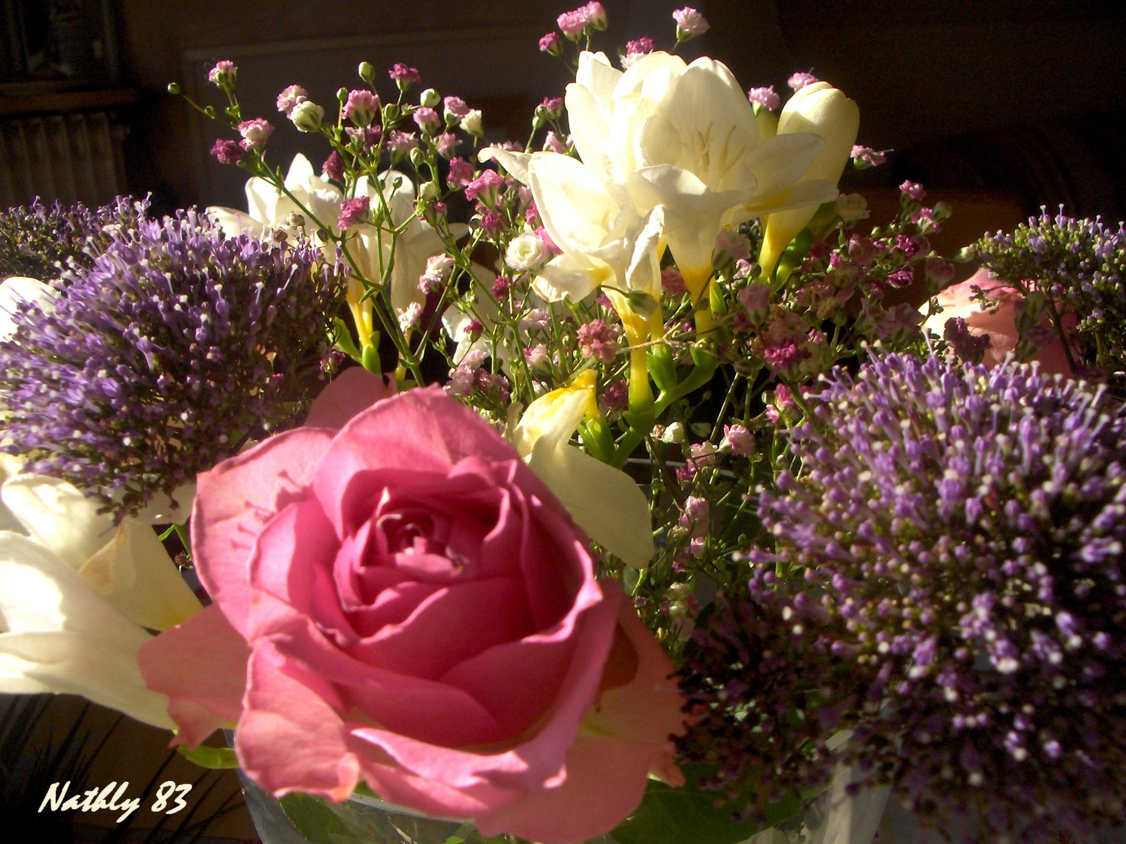 bouquetdu7fvrier07025.jpg