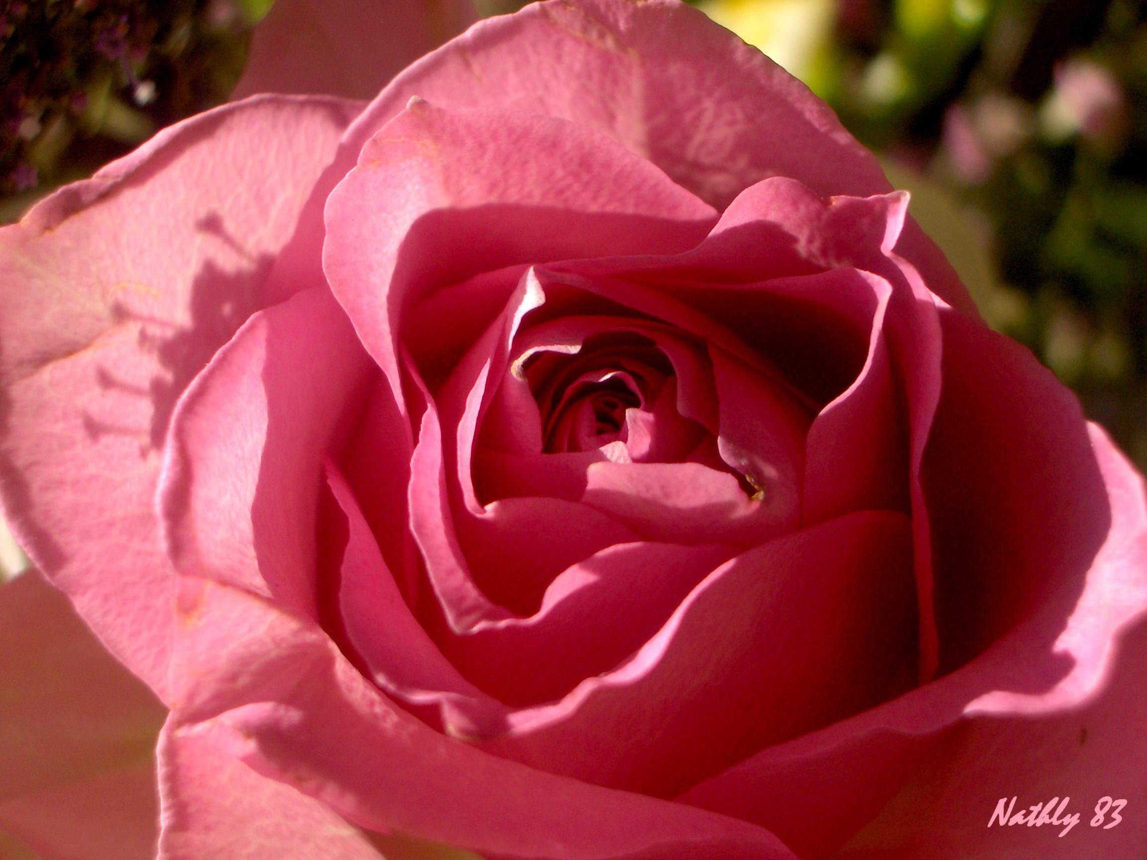 bouquetdu7fvrier07027.jpg