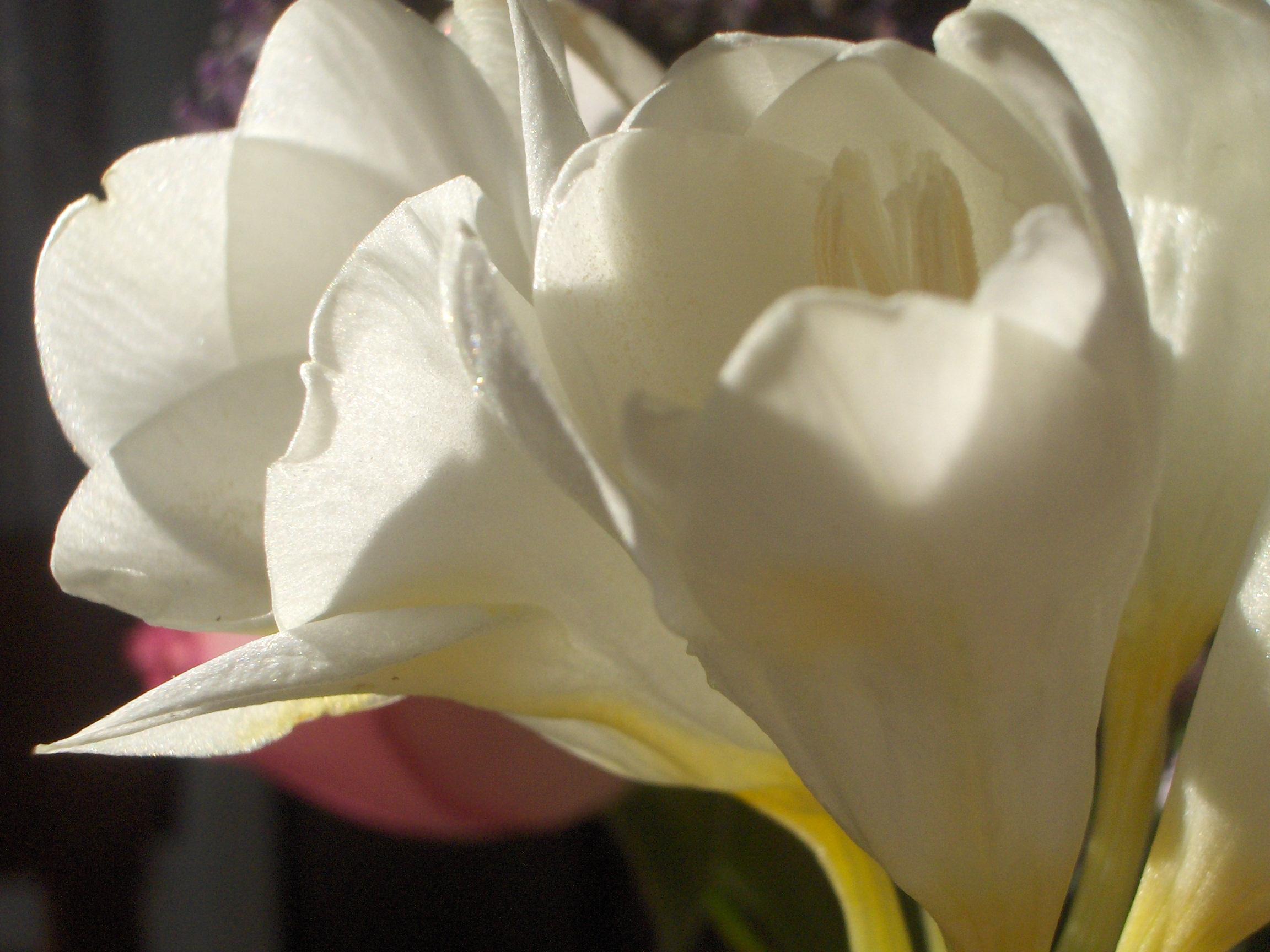 bouquetdu7fvrier07028.jpg