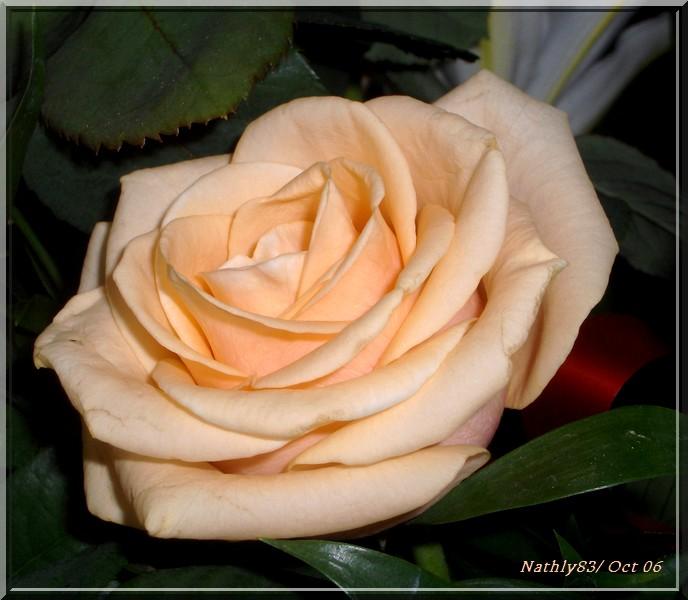 fleursoct06001.jpg