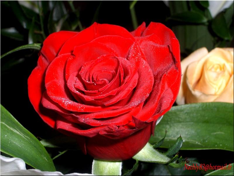 fleursoct06003.jpg