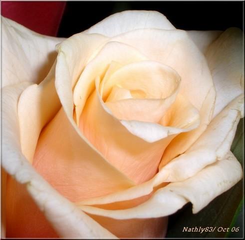 fleursoct06007.jpg