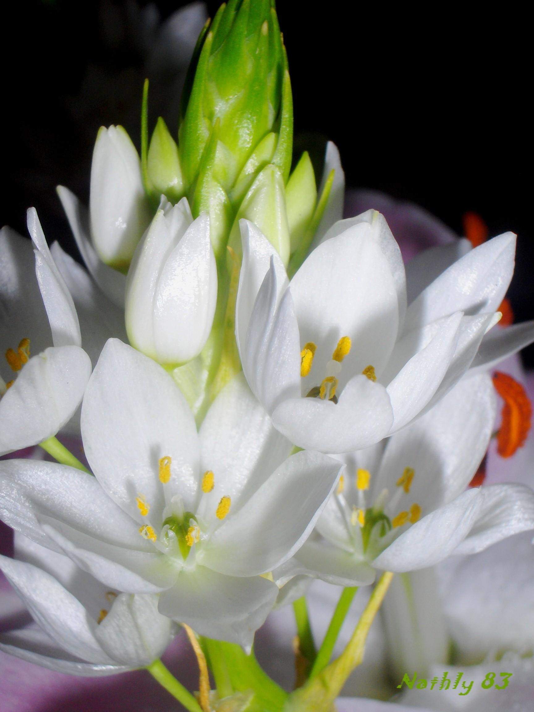 bouquet blanc février 07